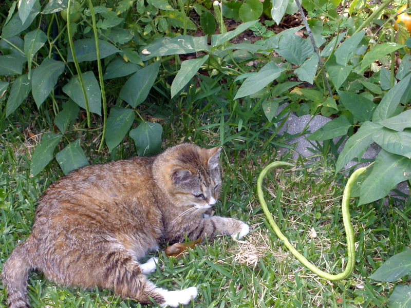 how to get rid of feral cats in my yard